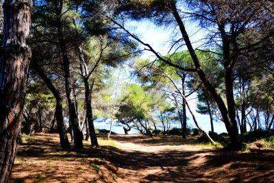 Îles de Lérins sainte marguerite12