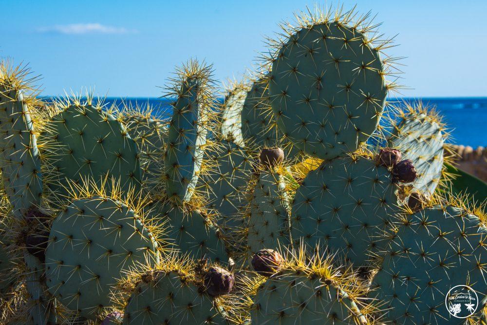 cactus-antibes--e1511885252172