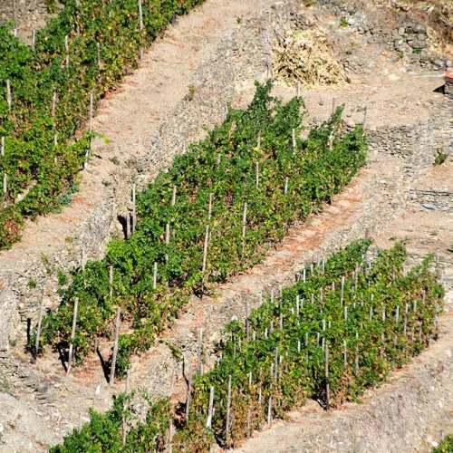 corniglia-italie-cinque-terre