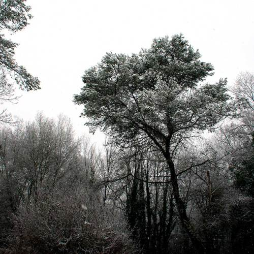 neige-arbre-fevrier-2018-valbonne-sophia-antipolis-cote-dazur