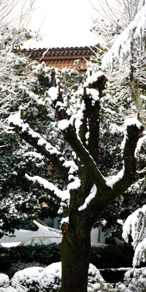 neige-arbre-valbonne-fevrier-2018