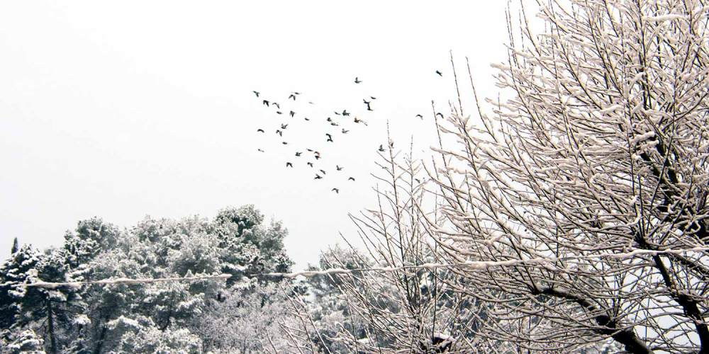 oiseaux-vol-valbonne-neige-fevrier-2018