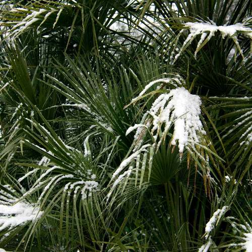 palmiers-nice-neige-côte-dazur