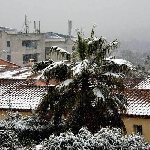 palmiers-sophia-antipolis-nice-cote-dazur
