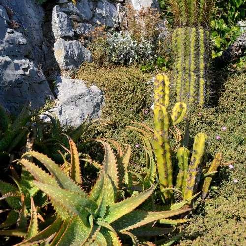jardin-exe-plantes-cote-dazur