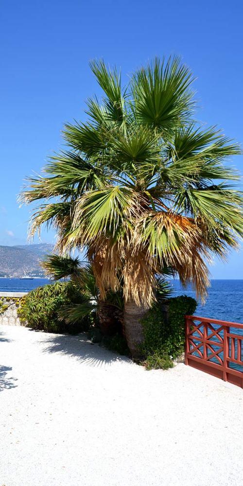 palmier-villa-grecque-kerylos-visite