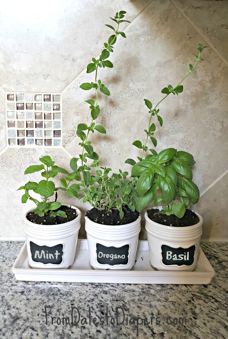 Kitchen Herb Garden  From Dates to Diapers
