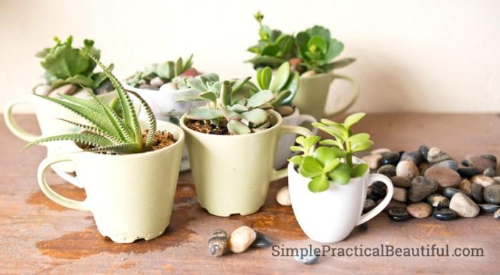 pebbles-in-pots
