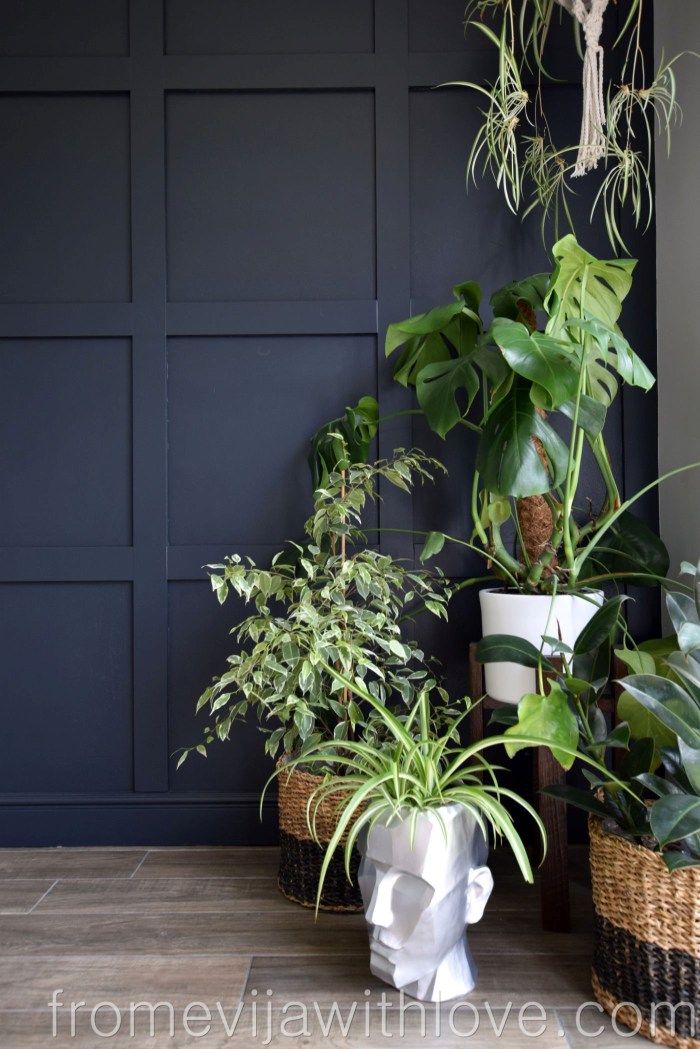 Beautiful Dark Grey Panelling and plants