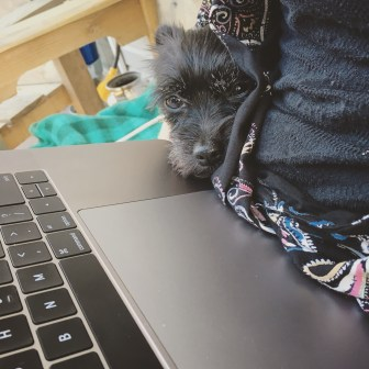 tiny black mutt leaning on my laptop keyboard while I work