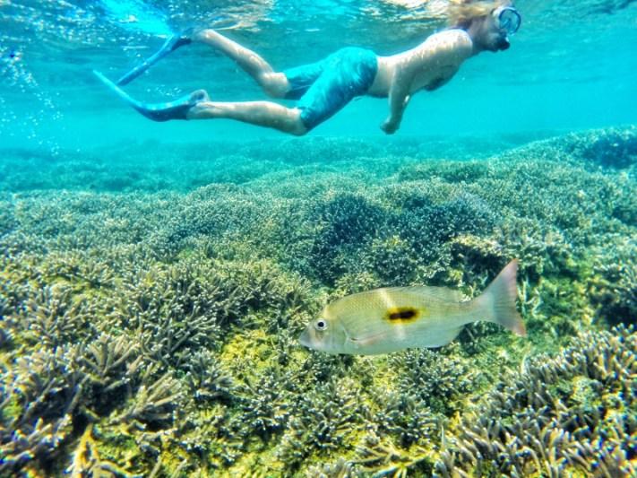Snorkelling in Sri Lanka Pigeon island