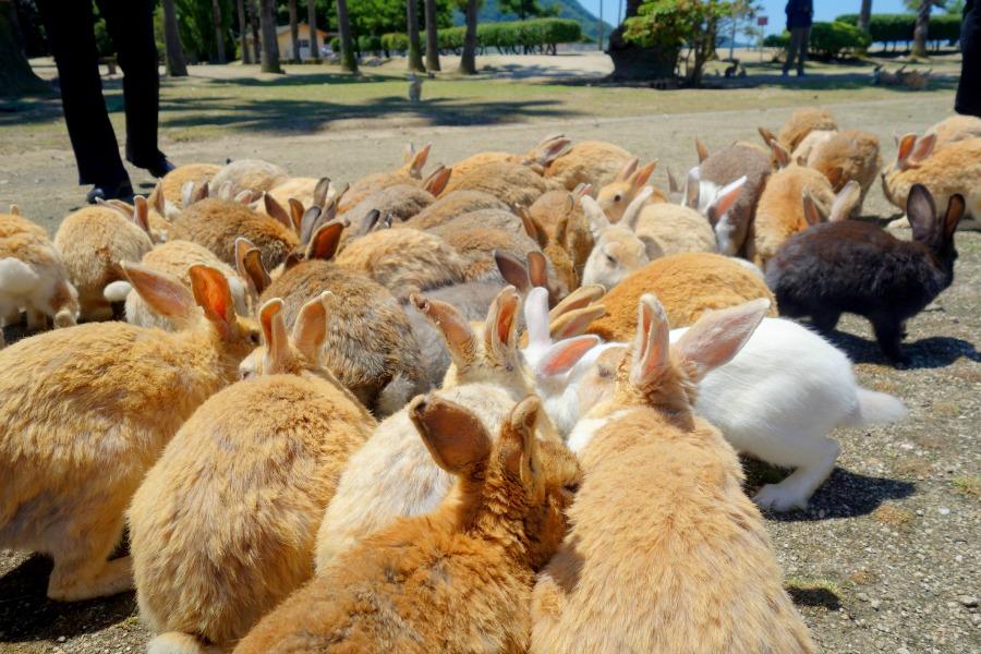 BunnyIslandJapan