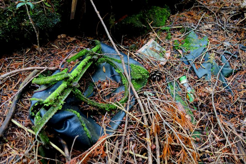 Journey to Suicide Forest – Aokigahara 4