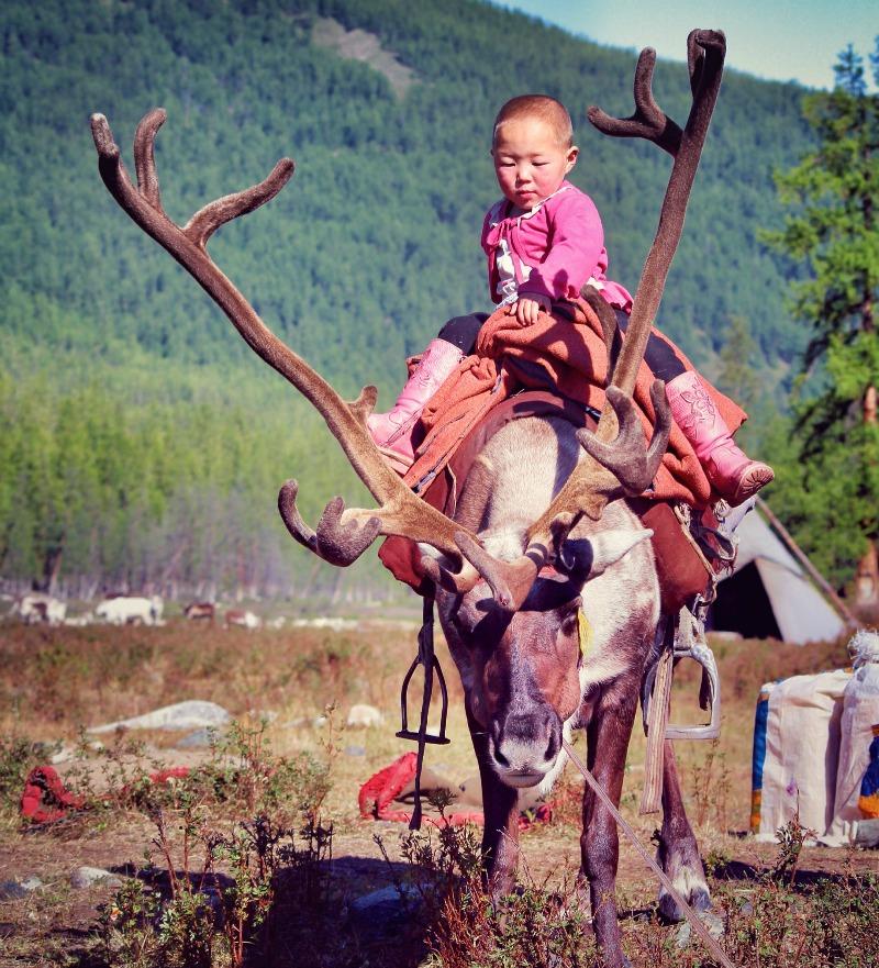 Reindeer herders mongolia