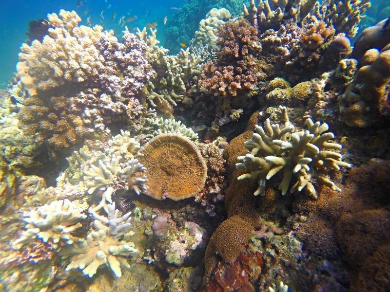 Apo Island Dive site