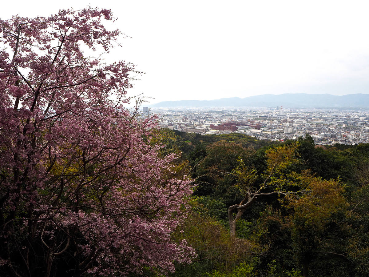 Tokyo City Guide Must See Sights