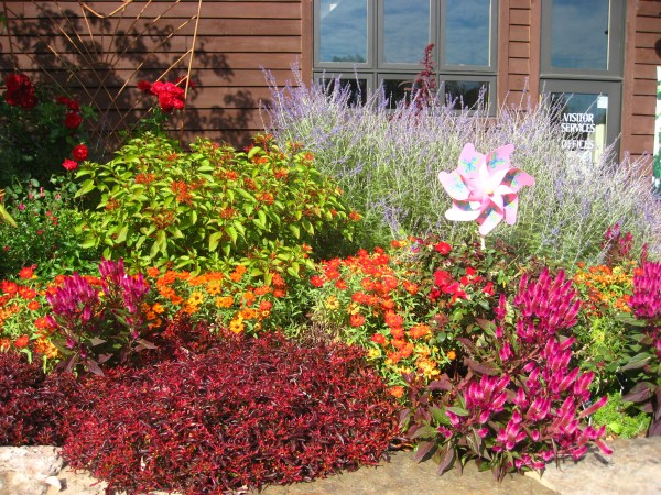 1000 butterfly gardens