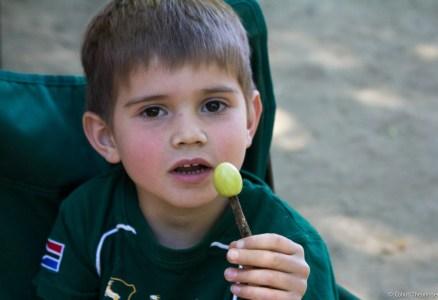 Roasting Grapes