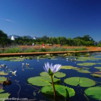 Views of the Babylonstoren gardens