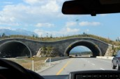 It's a bridge.... for animals.