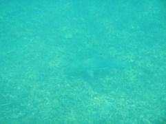 Requin!