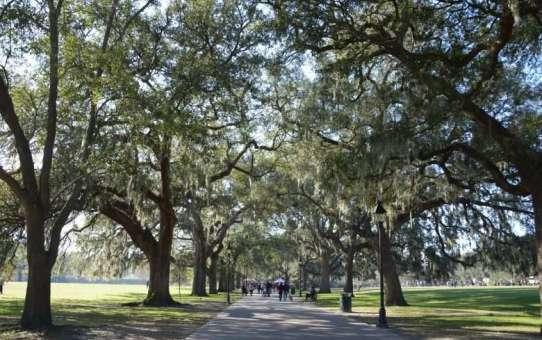 Oglethorpe's Ambition – Savannah