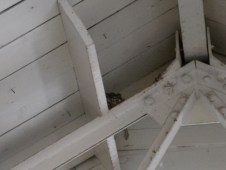 Barn swallow nest inside the Laphroaig distillery (Photo by Elina Mäntylä)