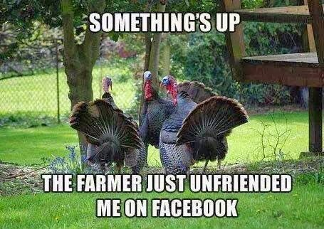 Thanksgiving Meme Turkey Facebook