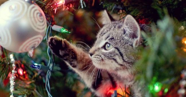 394-1743_12.19_HolidayPetSafety-Cat-2