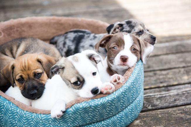 puppies_dog_bed.jpg.653x0_q80_crop-smart