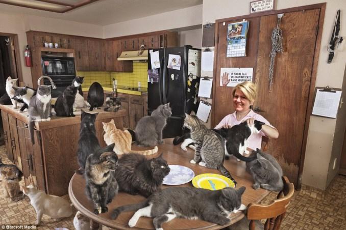 Mrs BeefLoaf Cat Sanctuary