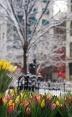 Union Square Greenmarket, NYC, Second Day of Spring