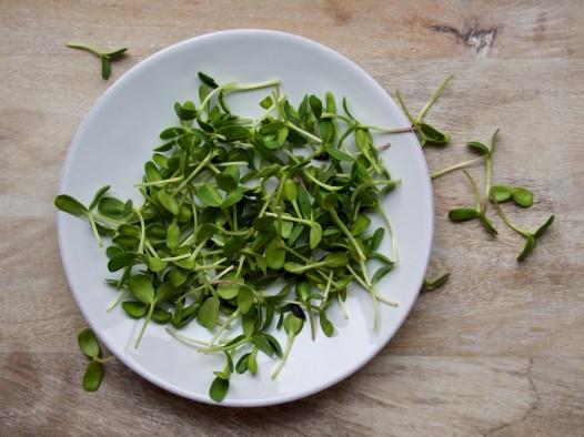 Sunflower Micro-Greens