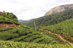 Rolling Hills, Munnar, from the corner table, #fromthecornertable