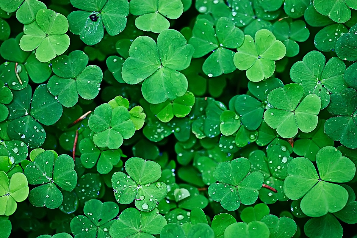 Did you know? Fun facts about the Irish in America!