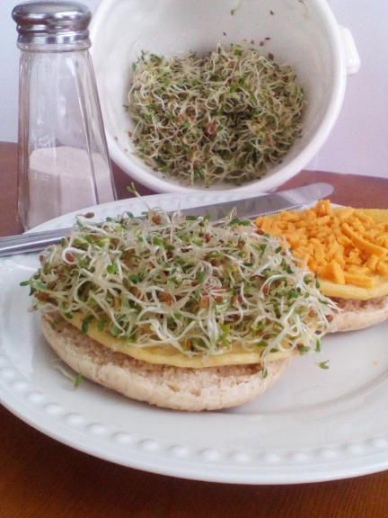 """""""Egg"""" Patties Topped with Sprouts"""