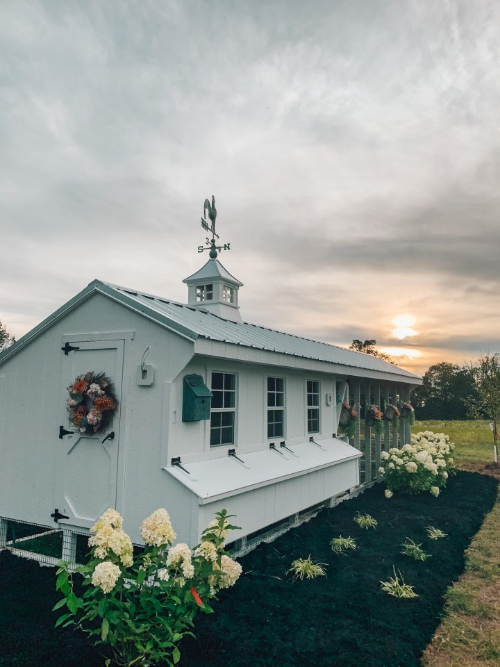 white chicken coop in the sunset