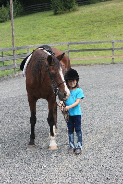 Horses, Horses, and More Horses