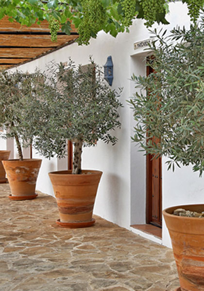 Casa Olivar, B&B, Andalucia, Spain, From the Poolside blog on boutique hotels and family holidays