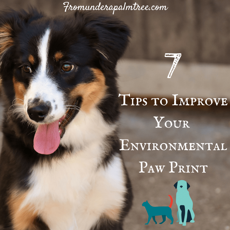 7 Tips to Improve Your Environmental Paw Print by From Under a Palm Tree