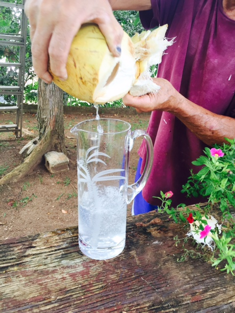Summer, Fresh coconut water
