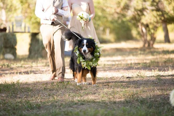 Kylee Cameron Wedding Procession - Dog Boots