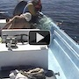 How One Man And His Boat Crew Saved A Gorgeous Humpback Whale Posted on November 20, 2012 by Linda  She was found nearly dead, tangled in a plastic fisherman's net off the coast of Mexico. Watch how determination saved her:
