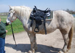 Draft Horse Black Show Saddle