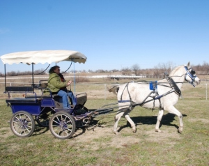 The Frontier Equestrian Marathon Carriage - Blue & Silver