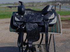 Frontier Equestrian Jasper MO
