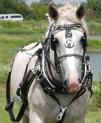 team sport harness with brollar collar draft horse size frontier rh frontierequestrian com