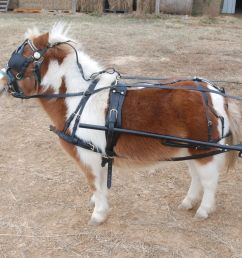 heavy duty leather mini horse harness frontier equestrian draft leather full harness leather pony harness [ 1440 x 1309 Pixel ]