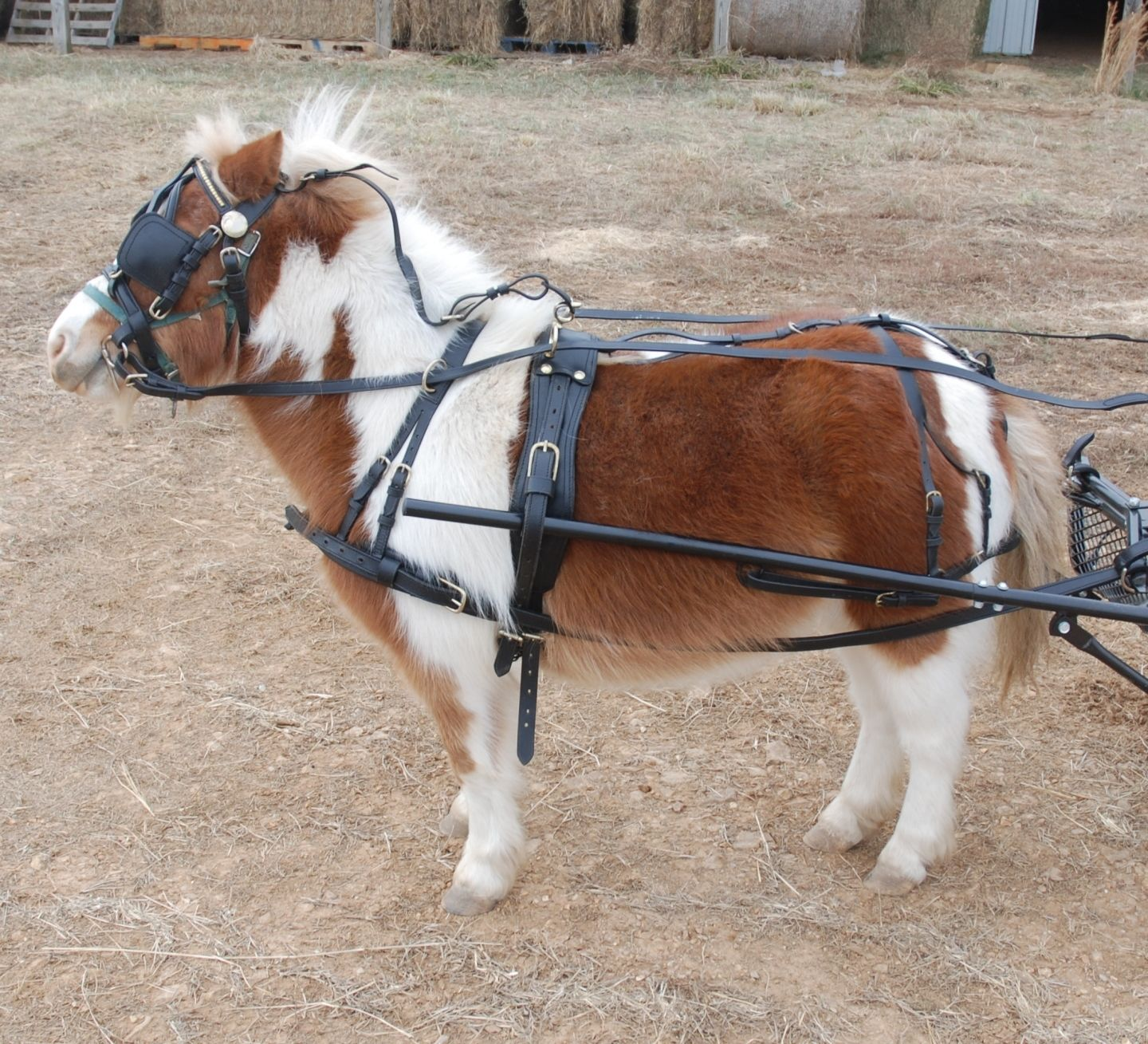 hight resolution of heavy duty leather mini horse harness frontier equestrian draft leather full harness leather pony harness