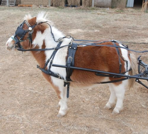 small resolution of heavy duty leather mini horse harness frontier equestrian draft leather full harness leather pony harness